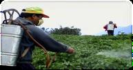 developpement-durable-pesticides