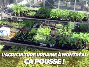 agriculture-urbaine-montréal1
