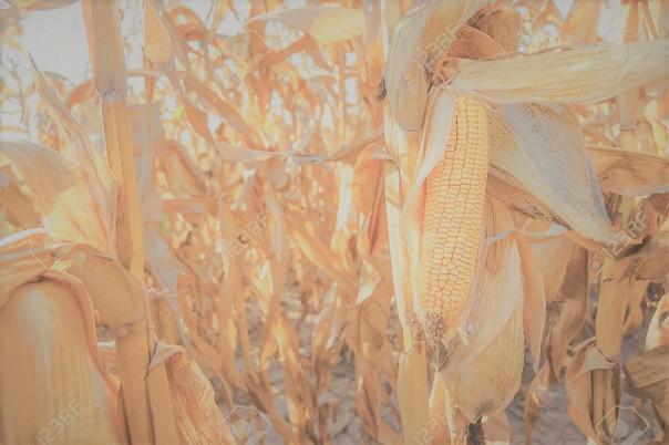 biomasse-biocarburant