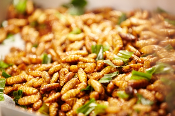 insectes-comestibles-bio-poudre-proteines-elevage-manger-vente-acheter-liste-9